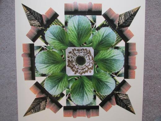 Greyfriars Garden Collage